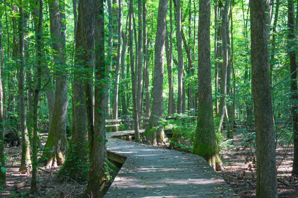 Beaverdam Boardwalk is a great kid-friendly hike in Huntsville, Alabama